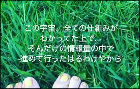 緑色の芝生の上で裸足の足先が見えている写真