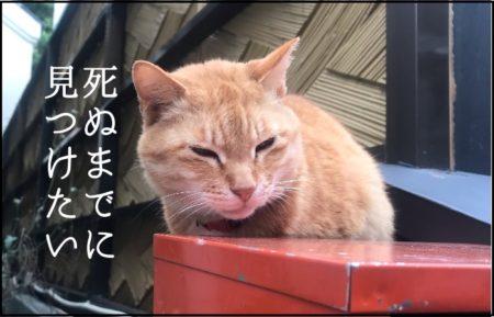 神奈川の神社前のポストの上で眠る猫