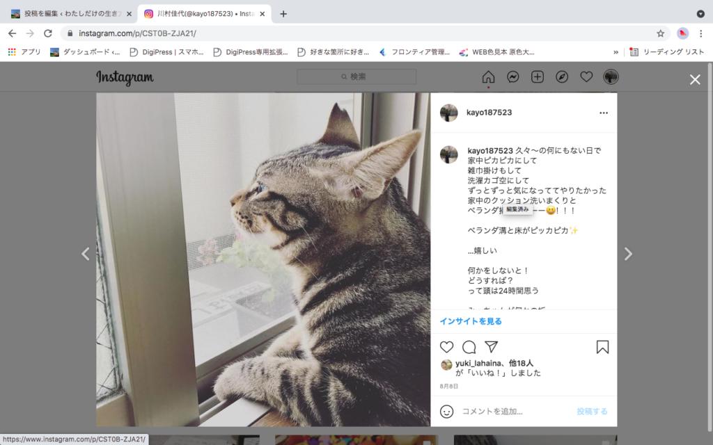 猫がベランダの窓から外を眺めている写真